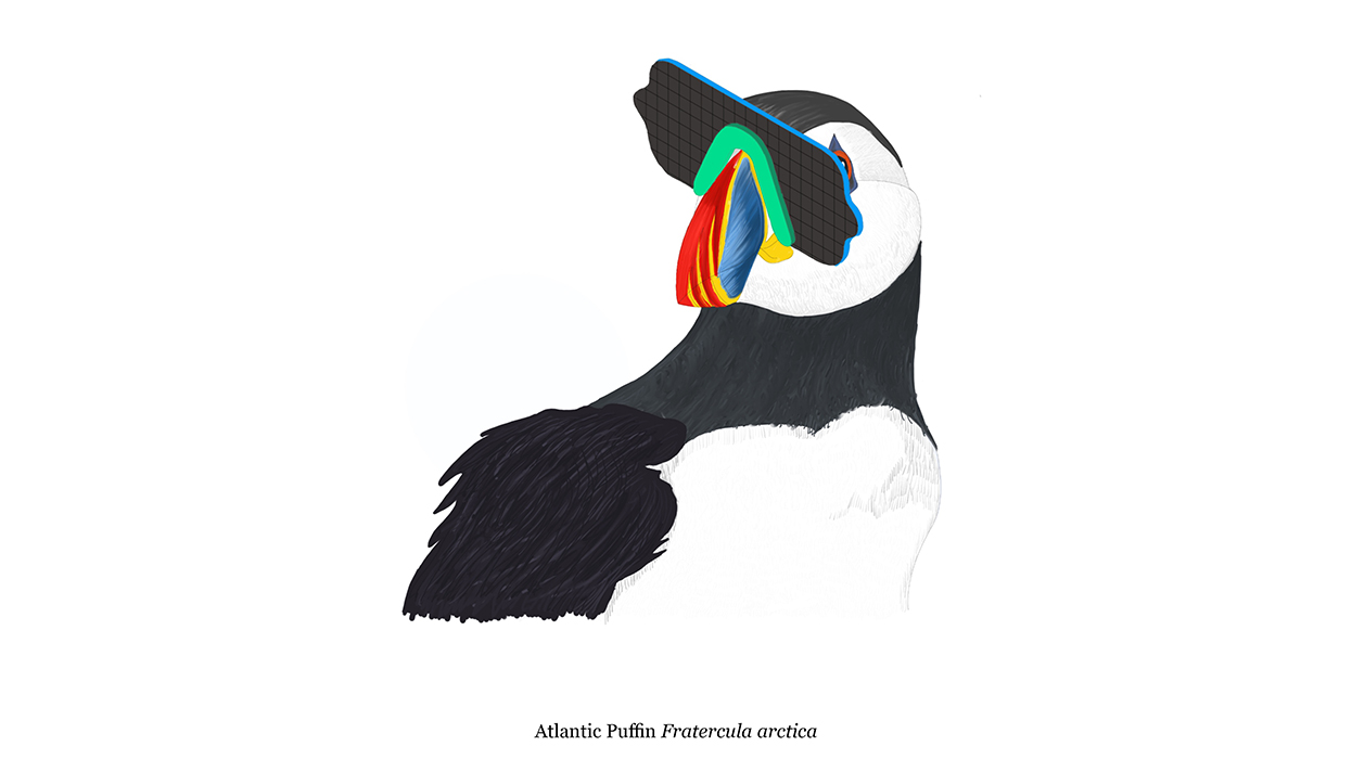 They tested the designs before creating their ready-to-wear range for live puffins.