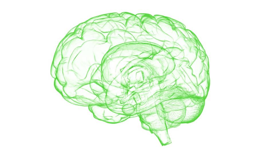 A green outline of a human brain on a white background